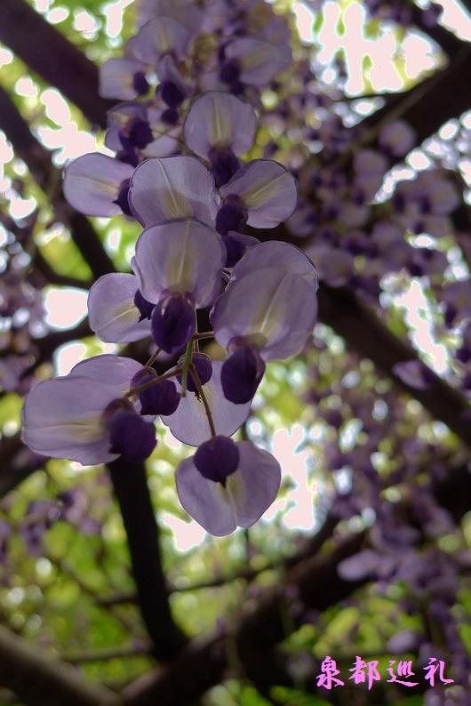20090426yutokuinari001.jpg