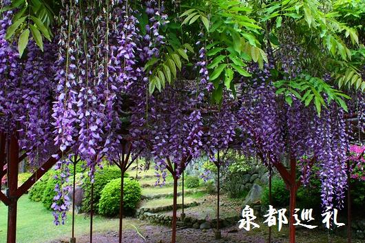 20090426yutokuinari002.jpg