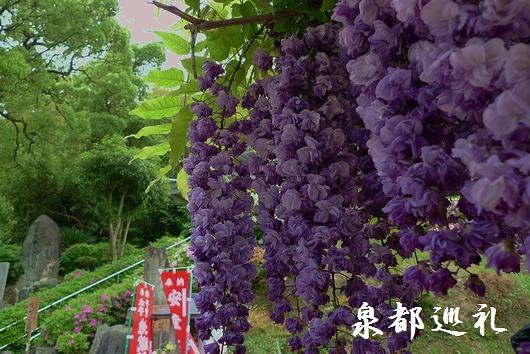 20090427jozenji07.jpg