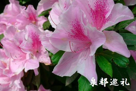 20090429daikozenji05_20090515215757.jpg