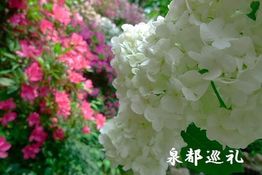 20090429daikozenji06_20090515215757.jpg