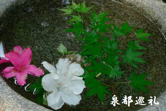 20090429daikozenji07_20090515215757.jpg