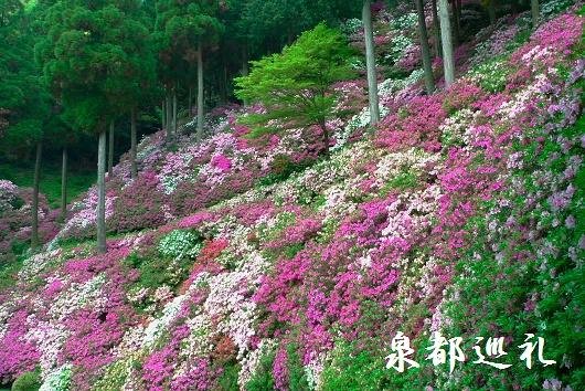 20090429daikozenji11.jpg