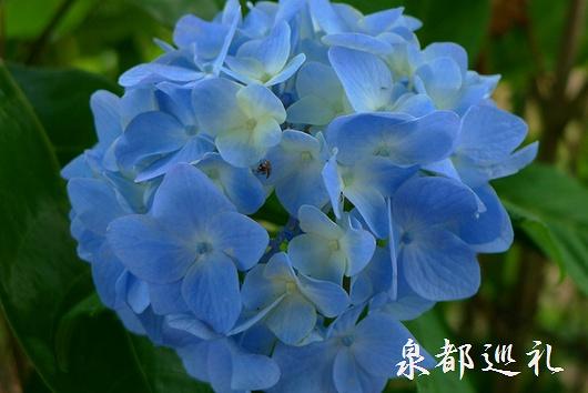 20090614yamatoshobuen04.jpg
