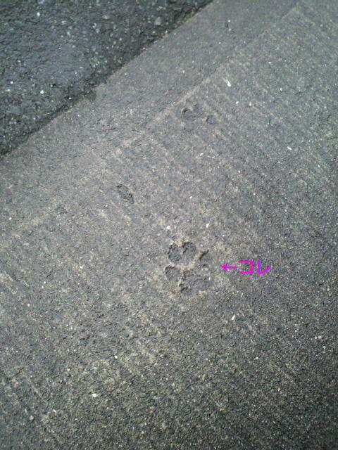 コンクリの足跡