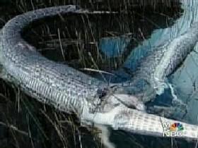 python_1.jpg