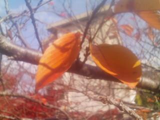 誕生日にも見られる紅葉(1)_2009-11-30