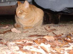 猫(1)_2008-12-15