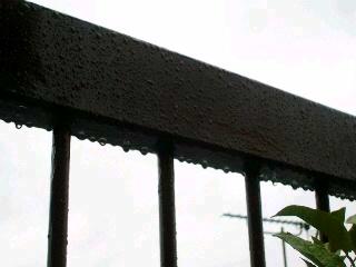 雨、止まないかな?_2009-04-16