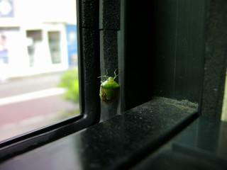 バスの中のカメムシ_2009-06-21