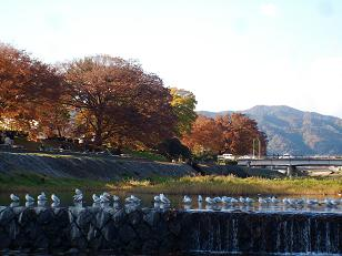 飛び石から眺めた賀茂川の秋の紅葉