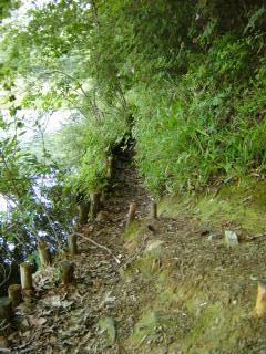 深泥池の水辺の細道(1)_2009-05-23