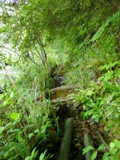 深泥池の水辺の細道(2)_2009-05-23