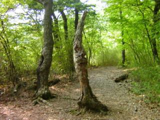 深泥池(変な形の木)_2009-05-23