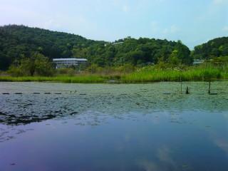 深泥池(全景)_2009-05-23