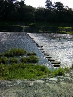 水面反射_2009-08-03A
