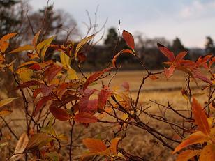 些細に残る、紅い葉っぱ_2008-12-30