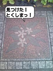 12_徳島の県花すだちの花(皇居ラン)