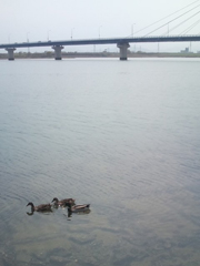 四国三郎の鳥