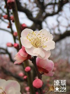 桃色がかわいいっ!