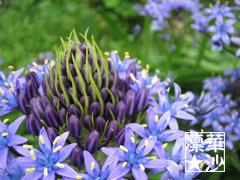 不思議な青い花