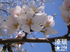 2004年3月31日撮影の万博の桜