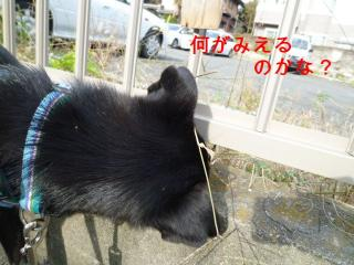 002_20111109163952.jpg
