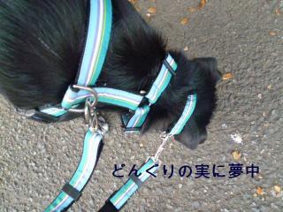 004_20111109163952.jpg