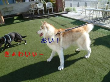012_20111121153252.jpg