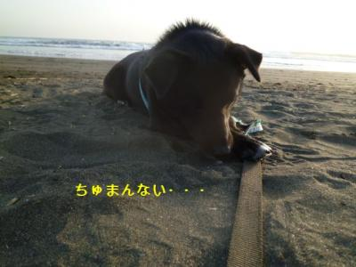 038_20120306211303.jpg