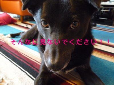 100_20120114230551.jpg