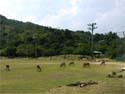 包ヶ浦グラウンドのシバ草地