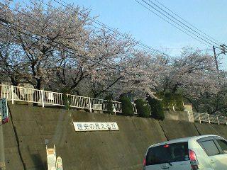 080411_sakura2.jpg