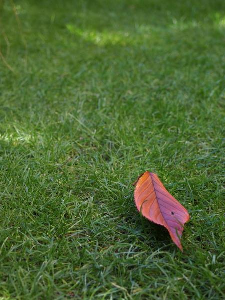 芝の上の落ち葉