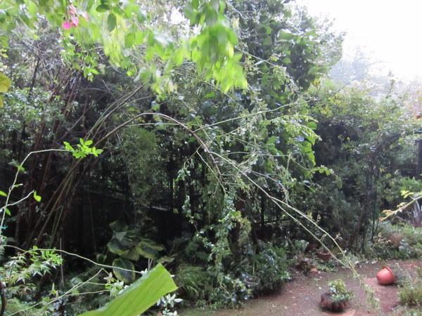 台風通過中2