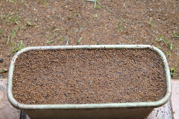 補修用のプランター芝の種まき