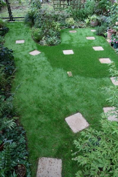 芝の踏み付け2