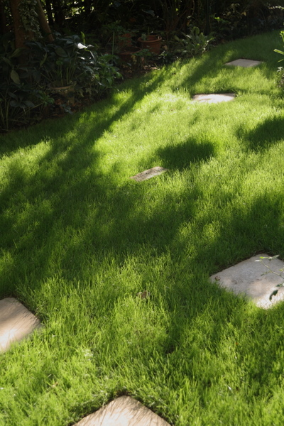 芝刈り前の芝