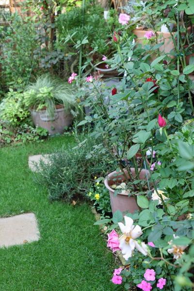 緑の芝とバラの風景1