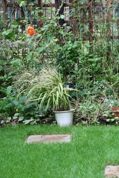 緑の芝とバラの風景3