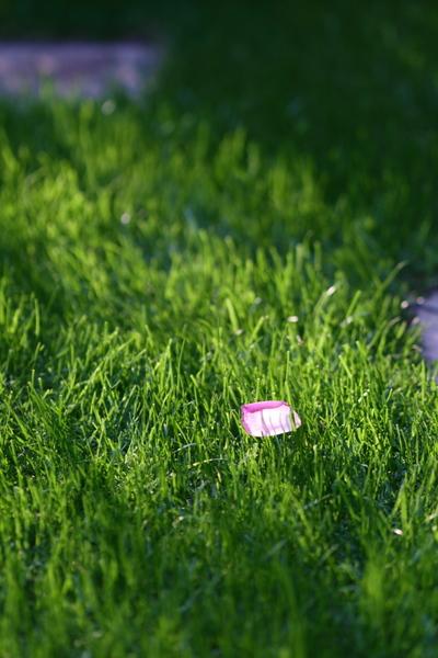芝の上の花びら
