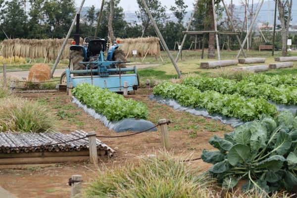 野菜畑と田んぼ