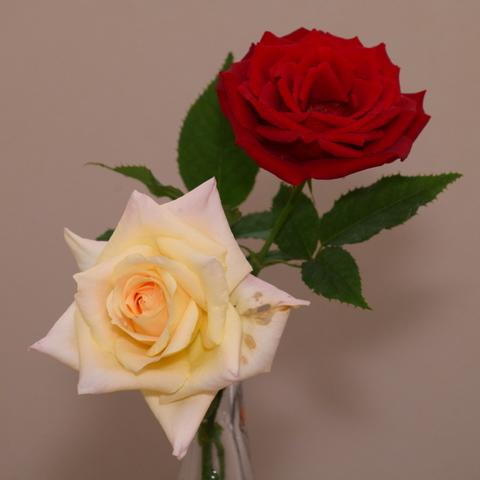 バラの生け花