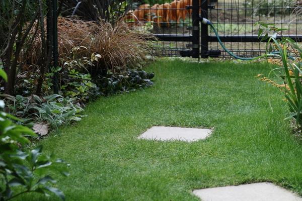 芝庭の様子1