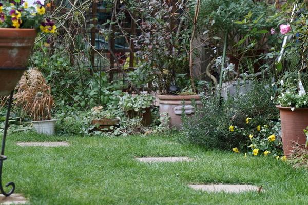 芝庭の様子2