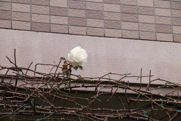 新雪(2012/1/16)
