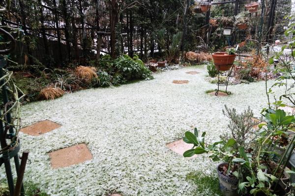 雪の庭 2012/1/20
