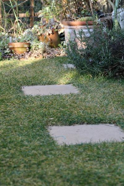今日の芝2