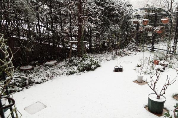 2/29の雪