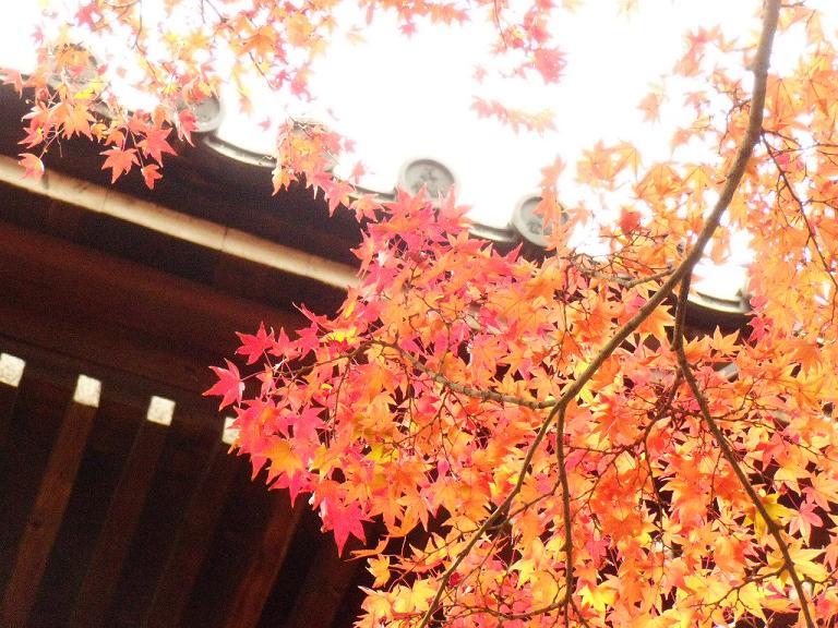 Kyoto2日目7